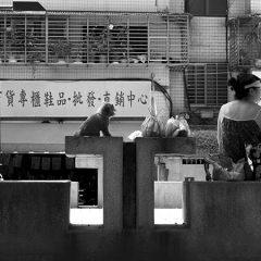 日課 (2013)